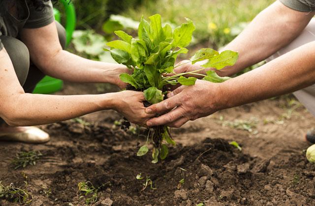 Agradecimiento a la Industria Agroalimentaria COVID-19